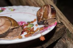 Ślimaczki je psiego jedzenie od pucharu Fotografia Royalty Free