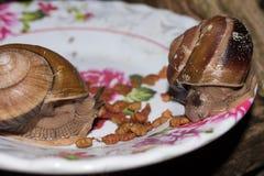 Ślimaczki je psiego jedzenie od pucharu Zdjęcie Royalty Free