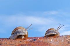 Ślimaczki na dachu Zdjęcia Royalty Free