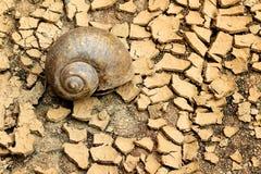 Ślimaczki umierali na suchej ziemi Fotografia Royalty Free