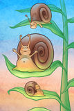 Ślimaczki w ranku Fotografia Stock