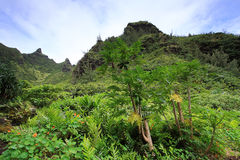 从Limahuli庭院,考艾岛海岛的看法 免版税库存图片