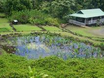 Limahuli-Garten, Northshore Hawaii lizenzfreies stockbild
