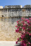 Limassol castle with flowering plant Cyprus Royalty Free Stock Photos