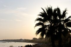 Limassol Sunset. Silhouette of palm tree against sunset scene in Limassol Stock Photos