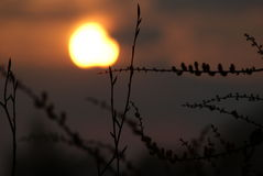 Limb in the Sunset. This is a limb of a tree in the sunset royalty free stock photo