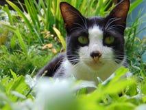 Limbi mój kot w ten sposób przystojny obrazy stock