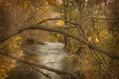 Limbs of a tree over a creek in the fall. Royalty Free Stock Photography