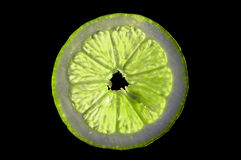Lime 1 royalty free stock photos
