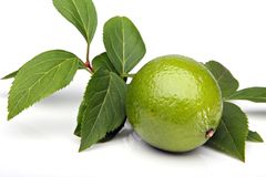 Lime. Single lime with leafs, isolated on white background Stock Images