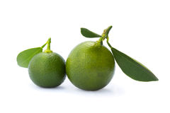 Lime. Two whole limes with leaves on white background Stock Images