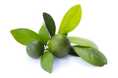 Lime. Two whole limes with leaves on white background Stock Photography