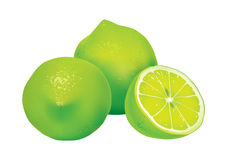 Lime. Detailed vector illustration of lime Royalty Free Stock Photos