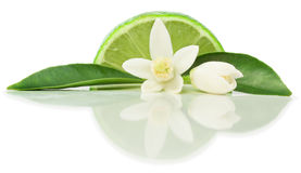 Lime and blossom Royalty Free Stock Images