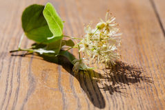 Lime blossom Royalty Free Stock Image