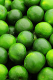 Lime citrus fruit Royalty Free Stock Images
