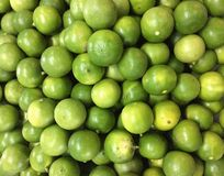 Lime citrus fruit. A lot of lime citrus fruit as a background Stock Photography