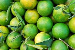 Lime citrus fruit Stock Photo