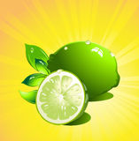 Lime citrus fruit. Vector Royalty Free Stock Images