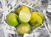 Lime citrus fruit Royalty Free Stock Photography