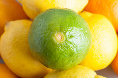 Lime and Citrus Fruits Royalty Free Stock Photography