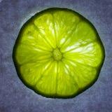 Lime Closeup Stock Photography