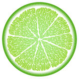 Lime in the cut close up Stock Images