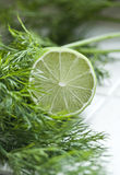 Lime and dill Royalty Free Stock Photos