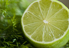 Lime and dill Royalty Free Stock Photo