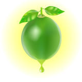 Lime with drop of juice isolated Stock Images
