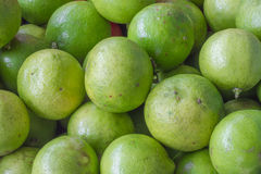 Lime fresh from the farm Royalty Free Stock Image