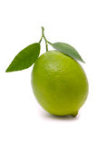 Lime with fresh leaves Stock Images
