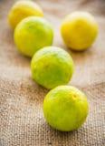 Lime. Fresh Lime/Lemon close-up stock photo Stock Images