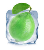 Lime frozen in the ice cube close-up  on white background Stock Images