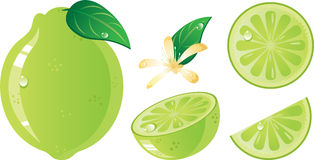 Lime fruits icon set Stock Images