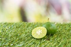 Lime on grass Stock Image