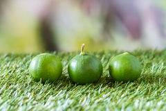 Lime on grass Royalty Free Stock Image