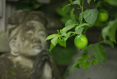 Lime green grows on the tree on the background of the sculpture women praying. Bali, Indonesia Royalty Free Stock Photos