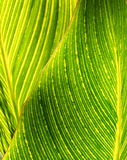 Lime Green And Yellow Leaves-Background Royalty Free Stock Photography