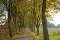 Lime grove in autumn in Lower Saxony, Germany Royalty Free Stock Photo