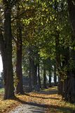 Lime grove in autumn in Lower Saxony, Germany Stock Photos