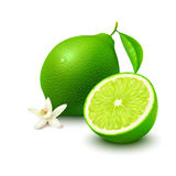 Lime with half and flower on white background Royalty Free Stock Photography