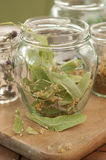 Lime Herb in Jar Stock Photography