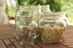 Lime Herbs and Lavandula in Jar Stock Images