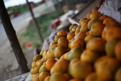 Lime orange at stall, Medan Indonesia. A lime is a hybrid citrus fruit, which is typically round, lime green, 3–6 centimetres (1.2–2.4 in&#x29 stock images