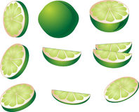 Lime illustration Stock Images