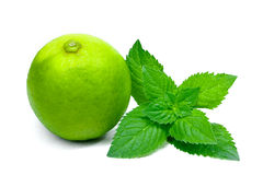 Lime isolated with mint on white background Stock Photos
