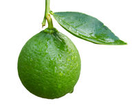 Lime isolated on white Royalty Free Stock Photos
