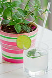 Lime juice and mint Royalty Free Stock Image