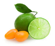 Lime and kumquat Royalty Free Stock Images